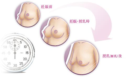 妊娠前/妊娠・授乳時/授乳(断乳)後のバストの変化